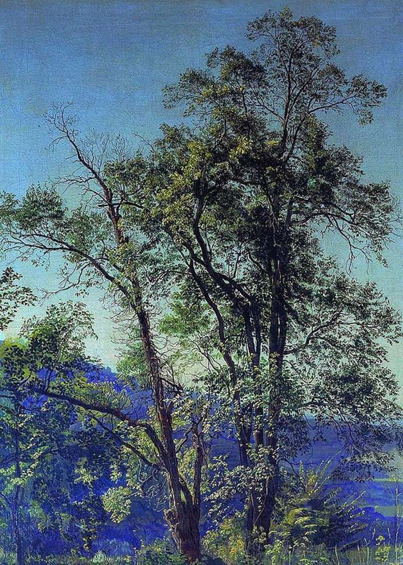Drzewo oliwne. Dolina Ariccia. W parku Arichcha   Aleksander Iwanow