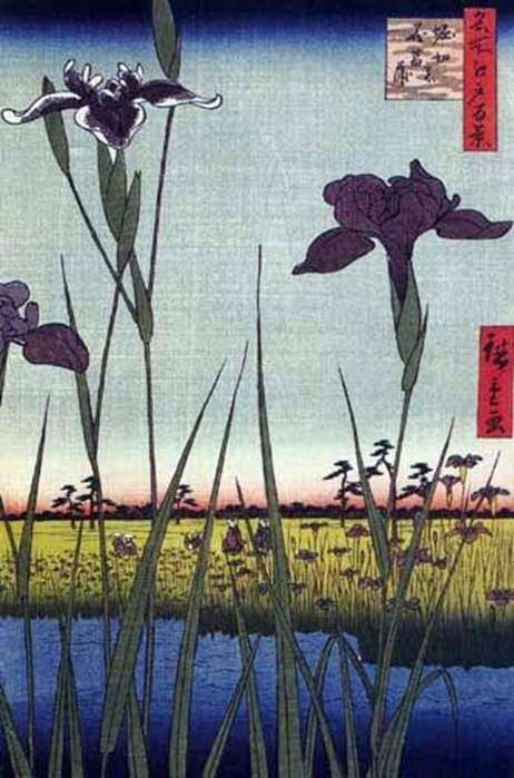 Irysy w Horikiri   Ando Hiroshige