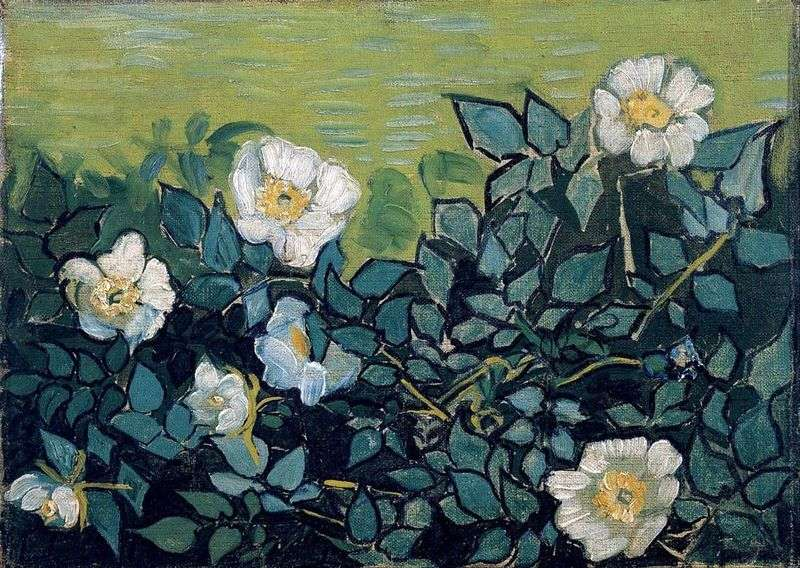 Dzikie Roze Vincent Van Gogh