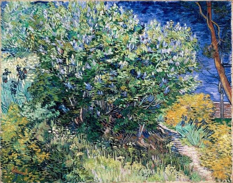 Liliowy krzew   Vincent Van Gogh