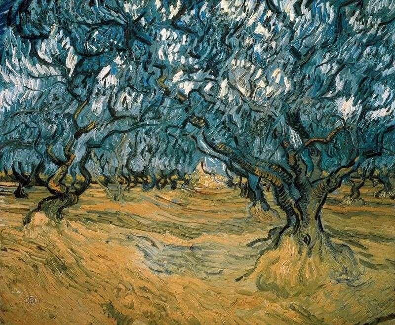 Drzewa oliwne   Vincent Van Gogh