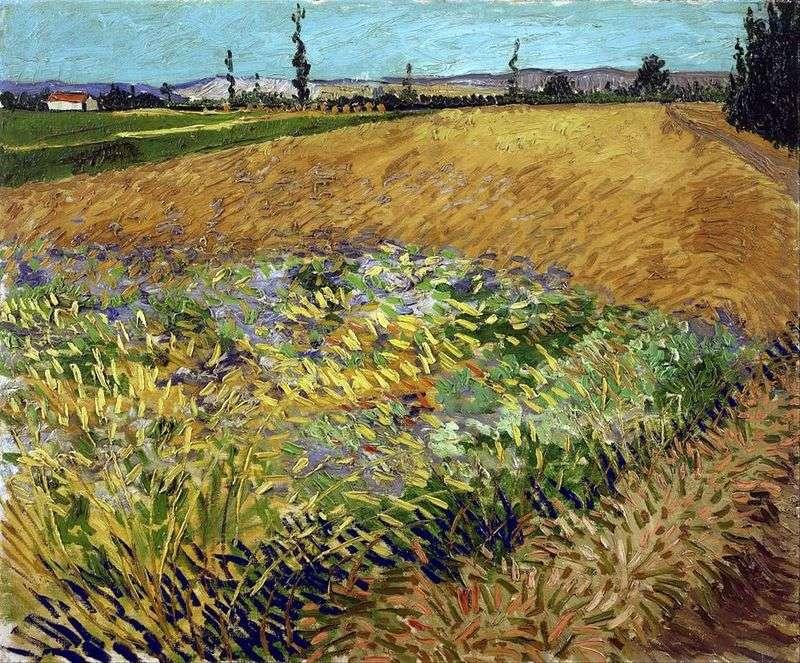 Pole pszenicy i u podnóża Alp w tle   Vincent Van Gogh
