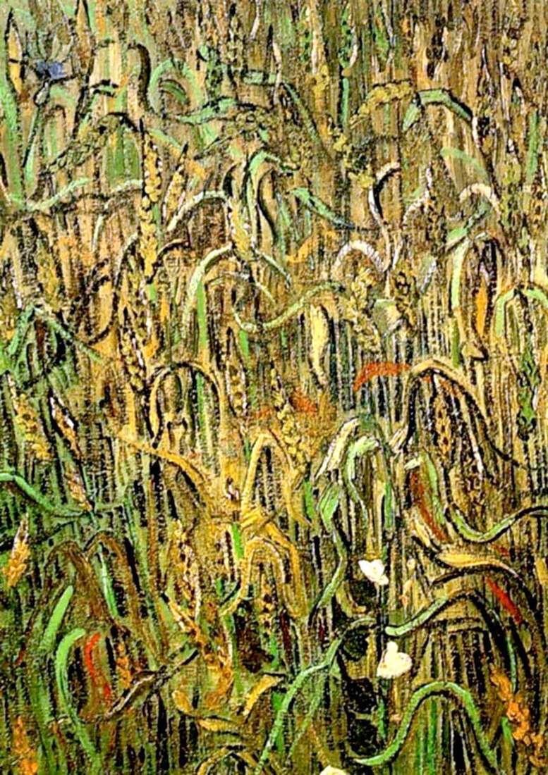 Pszeniczne uszy   Vincent Van Gogh