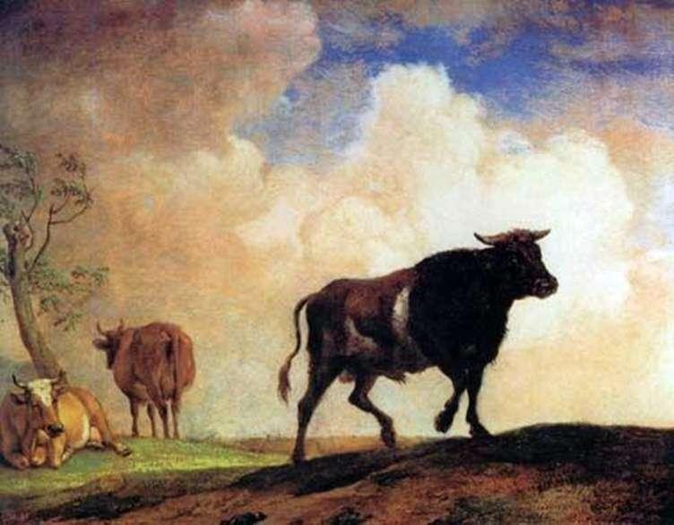 Bull   Paulus Potter