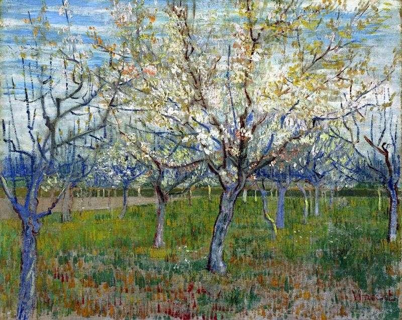 Sad z kwitnącymi morelami   Vincent Van Gogh
