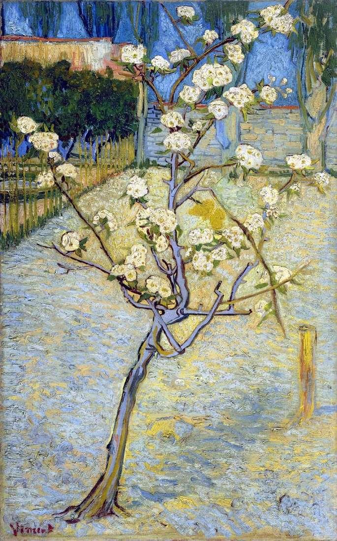 Kwiat gruszy   Vincent Van Gogh