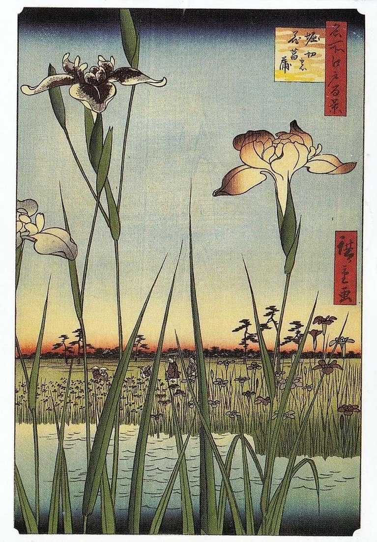 Irysy w Horikiri   Utagawa Hiroshige