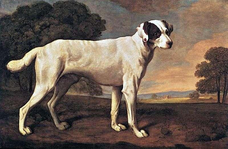 Portret psa w Gatton Park   George Stubbs