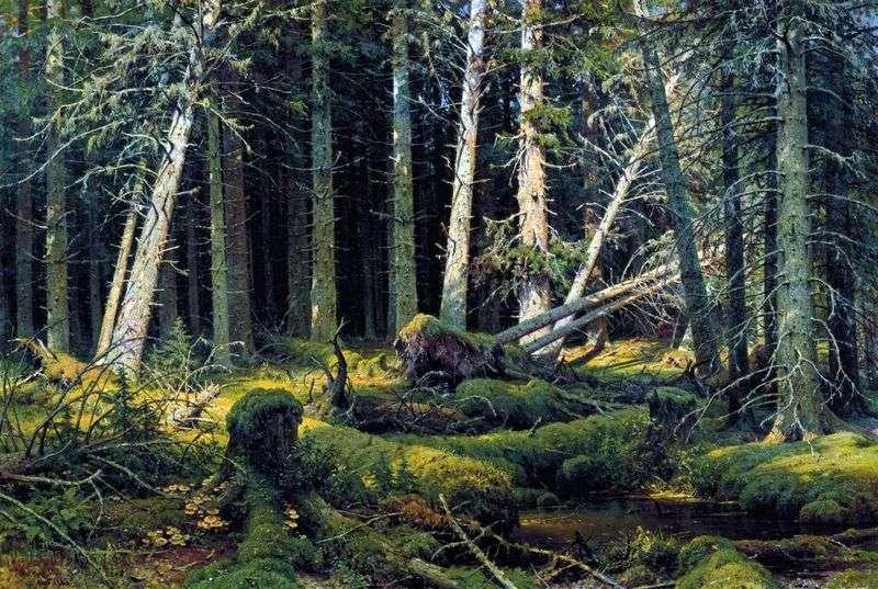 Burelom (las Vologda). Drzewa zerwane przez wiatr   Iwan Szyszkin