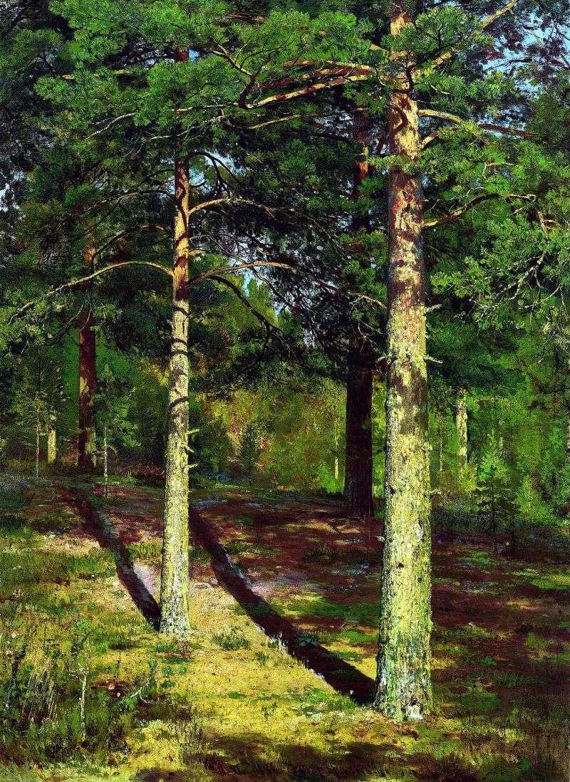 Sunlit Pines   Ivan Shishkin