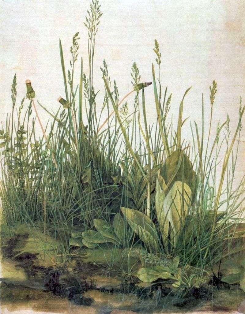 Duży kawałek łąki   Albrecht Durer